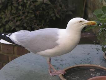 bird-seagull-1375454139.jpg
