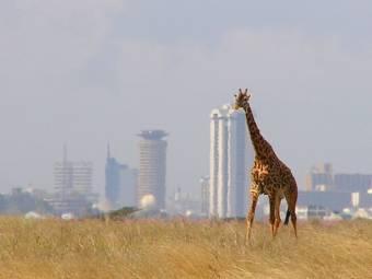 giraffe_-_skyline_-_nairobi_-_park-1380141316.jpg