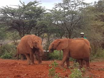 j1836-rps-partnership_20180923_006_baby-elephant-1539092781.jpg