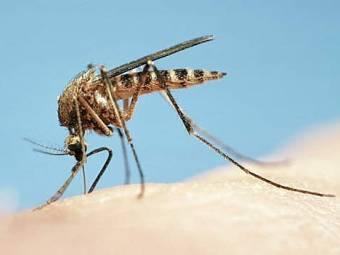 mosquito_bites-1375778534.jpg