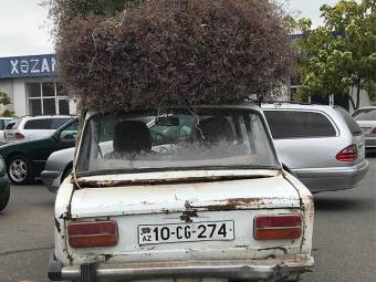 when-you-need-to-transport-a-tree-1537715044.jpeg